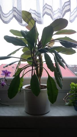 Diese Pflanze - (Wissen, Pflege, Pflanzen)