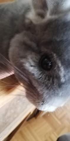 Was kann das sein bei mein chinchilla?