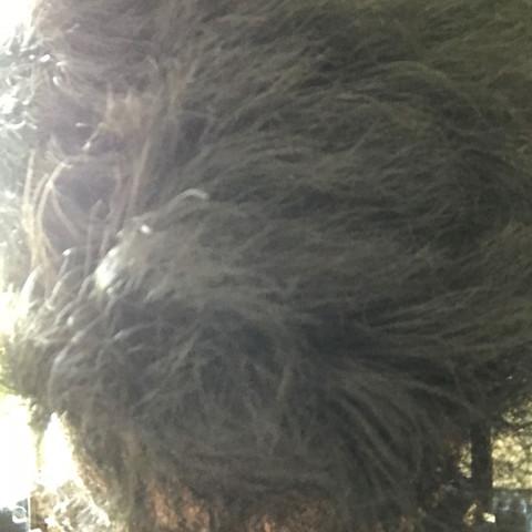Was Kann Ich Gegen Meine Extremen Verfilzten Haare Tun Trocken