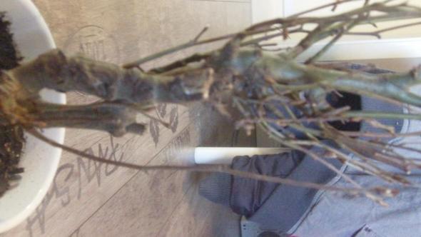 Baum5 - (Bilder, Pflanzen, klein)