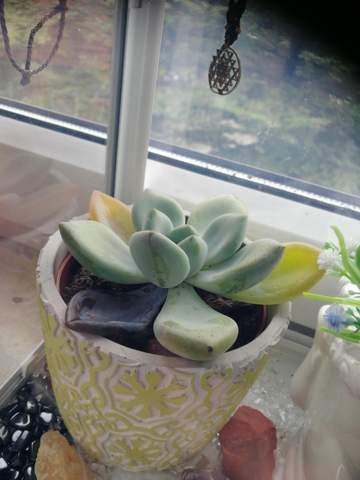 Was kann ich tun um meinen Kaktus zu retten?