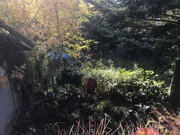 Was kann man aus diesem Garten machen?