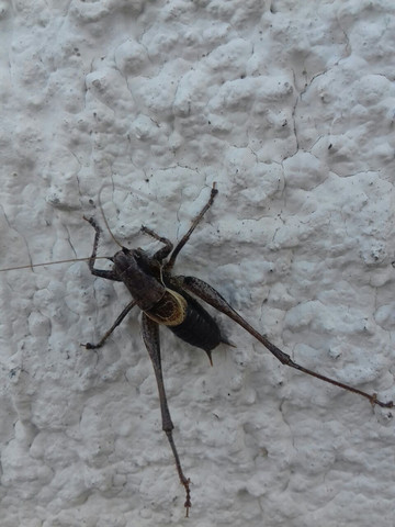 Insektenbild - (Natur, Insekten, bestimmen)