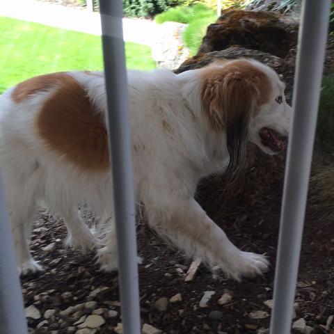 Hund von der Seite - (Tiere, Hund, Haustiere)