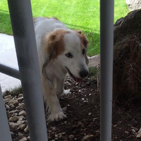Hund von vorne - (Tiere, Hund, Haustiere)