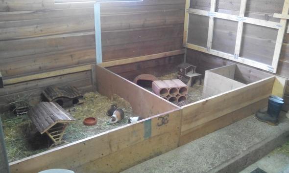 Man sieht hier das alte Gehege (links) und den neuen Anbau (vor ~2 Monaten) - (Tiere, Haustiere, Meerschweinchen)