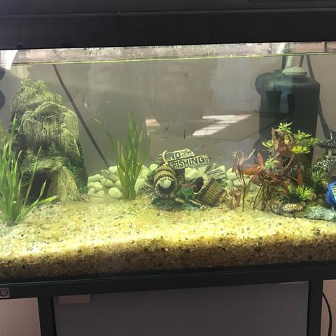Ich besitze 12 Neons, 1 Schleierkampffisch , 3 schwerttäger, 2 Antennenwelse   - (Fische, Aquarium)
