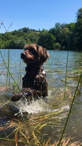 Was machen Hunde am liebsten?