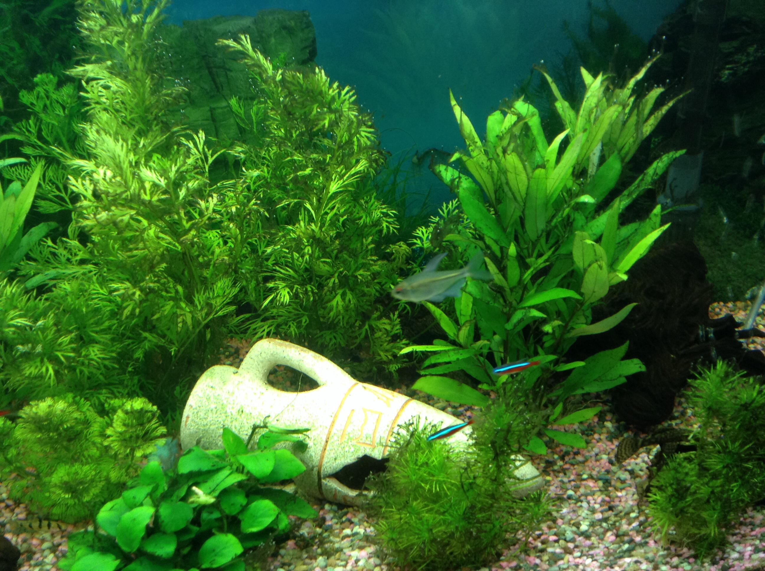 Was machen wenn man algen im aquarium for Fische die algen fressen im teich