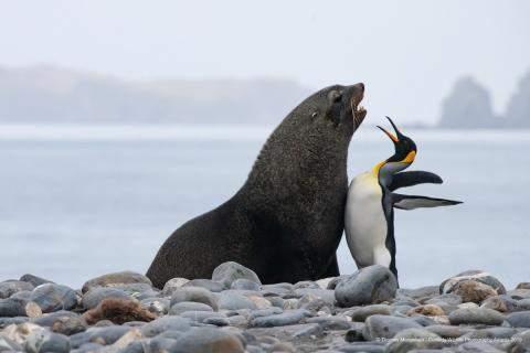 Was macht die Robbe und der Pinguin da?