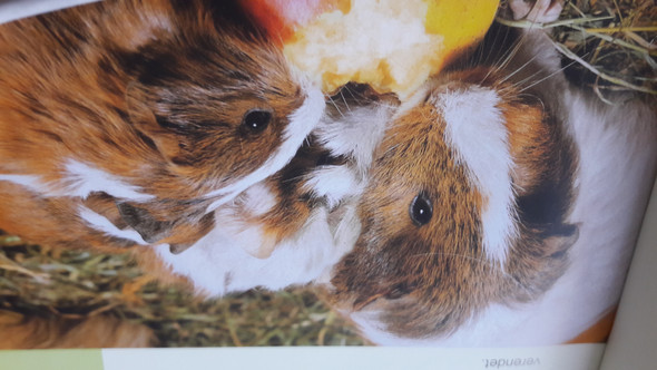 - (Tiere, Umfrage, Haustiere)