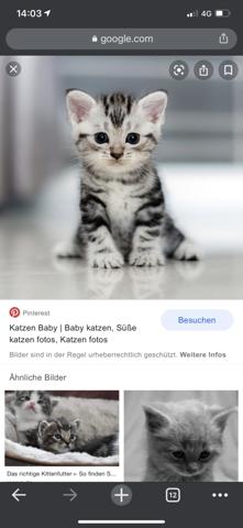 Was muss man beachten wenn man Katzen haben will?