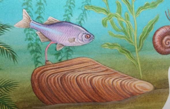 Was passiert hier zwischen Fisch und Muschel?