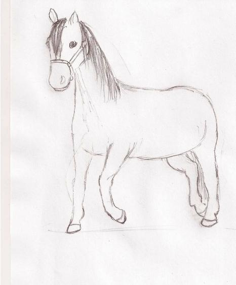 pferde malen