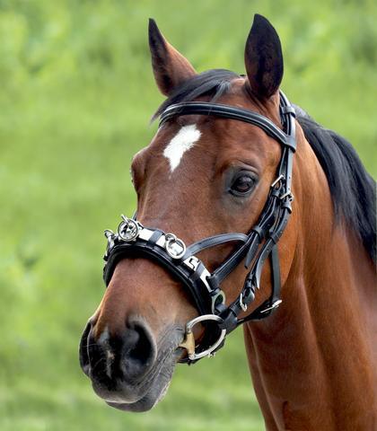 Kappzaum Wembly Waldhausen - (Pferde, Training, galopp)