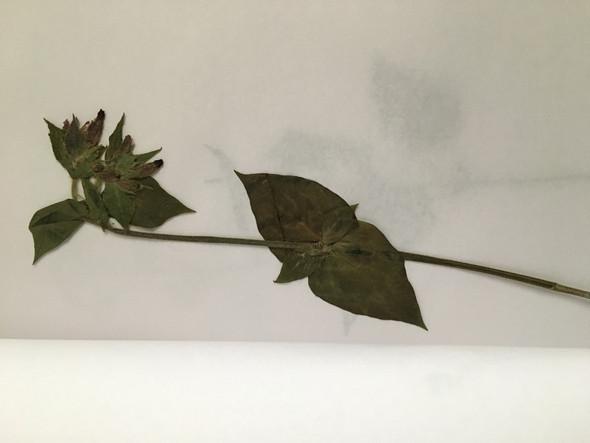 Was sind das denn für Blumen/Pflanzen?