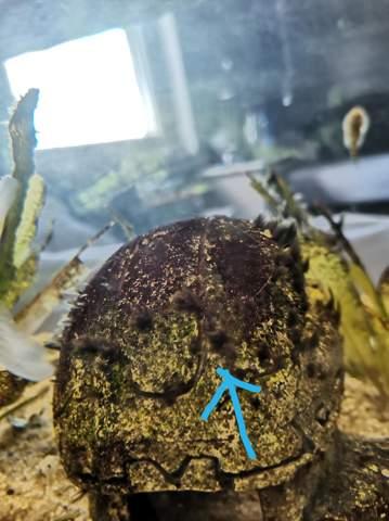 Was sind das für Algen?