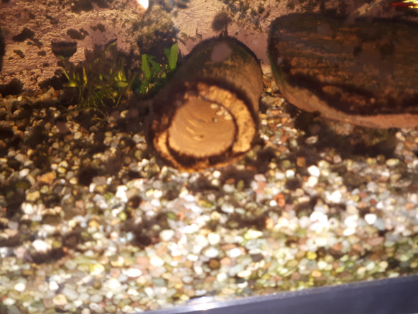 algen im aquarium entfernen hausmittel zuhause image idee. Black Bedroom Furniture Sets. Home Design Ideas