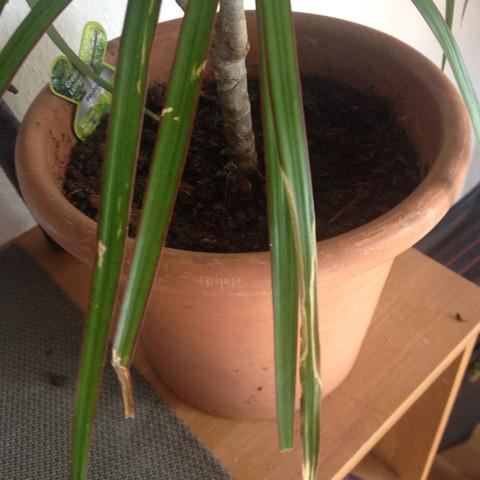 Was sind das für Flecken auf der Pflanze?