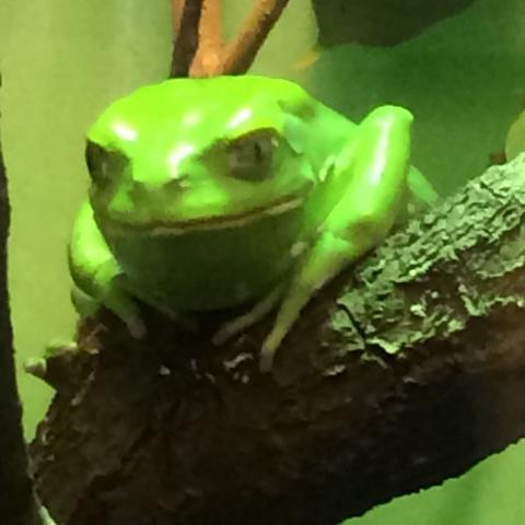 Hier Frosch2 - (Tiere, Frösche)