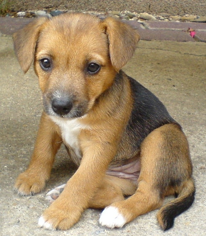 Wisst ihr was das für eine Hunderasse ist? - (Tiere, Hund, Welpen)