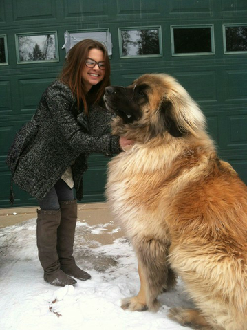 1. - (Hund, groß, Hunderasse)