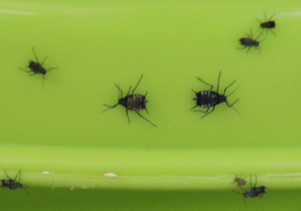 Was Sind Das Fur Insekten Die Meine Terrasse Belagern Garten