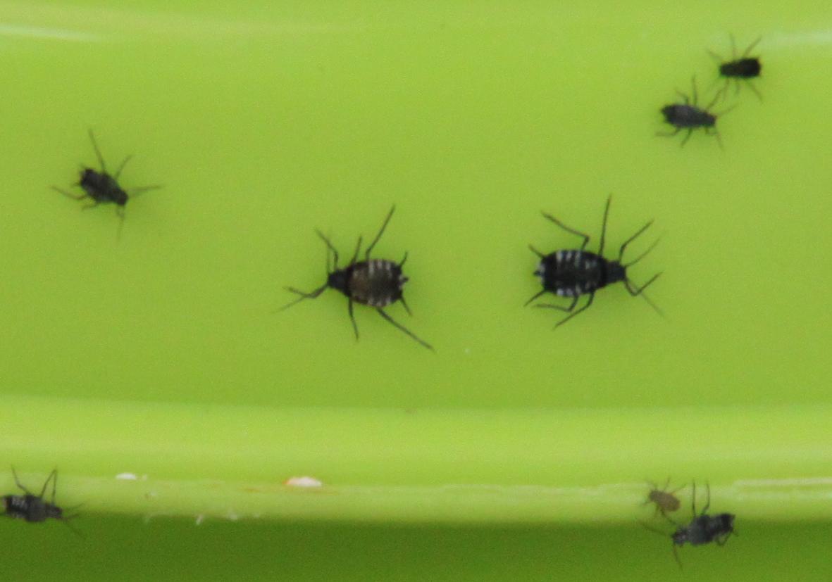was sind das f r insekten die meine terrasse belagern garten. Black Bedroom Furniture Sets. Home Design Ideas