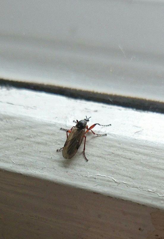 was sind das f r insekten fliegeninvasion fliegen. Black Bedroom Furniture Sets. Home Design Ideas
