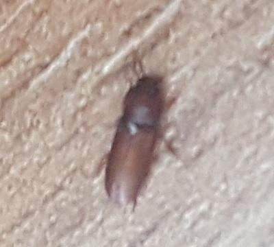 Was sind das für Käfer / Tiere?