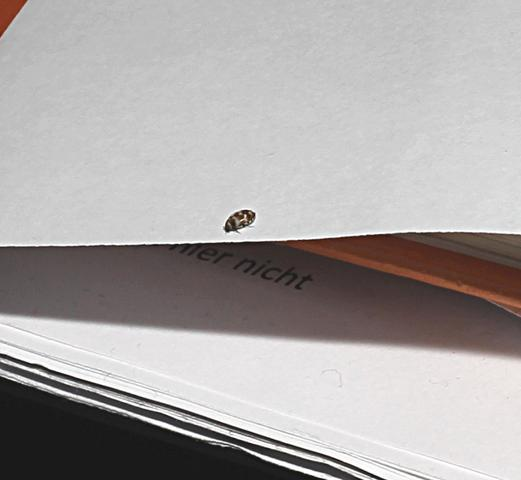 was sind das f r k fer 123 biologie insekten kaefer. Black Bedroom Furniture Sets. Home Design Ideas