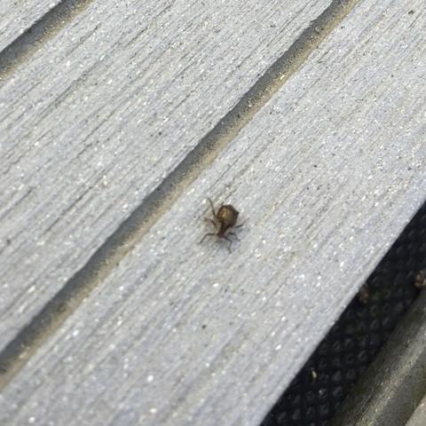 Was sind das für Käfer im garten?