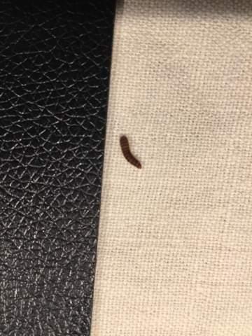 Was sind das für Käfer/Larven?