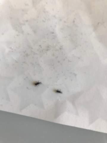 Was sind das für kleine schwarze Tiere?