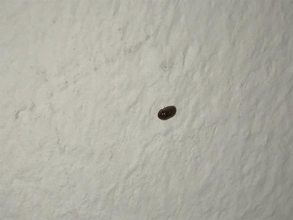 was sind das für kleinee käfer tiere insekten ungeziefer
