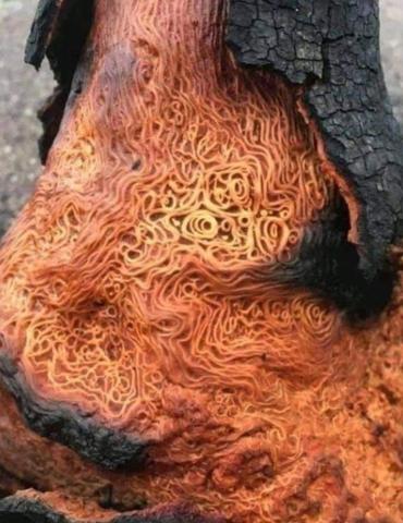 Was sind das für komische Würmer in dem Baum?