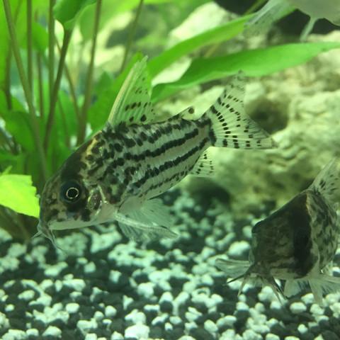 Bild in unserem Auqarium - (Fische, Aquarium, schwimmen)