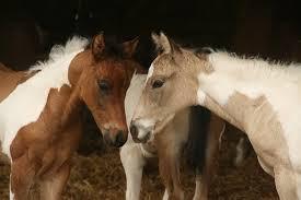 Pferd - (Pferde, Rasse, Fell)