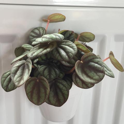 2.Pflanze - (Pflanzen, Art)