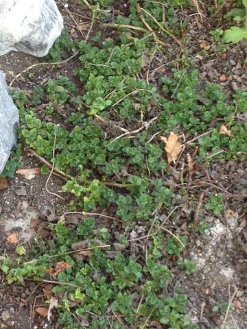 Pflanze1 - (Garten, Pflanzen, Blumen)