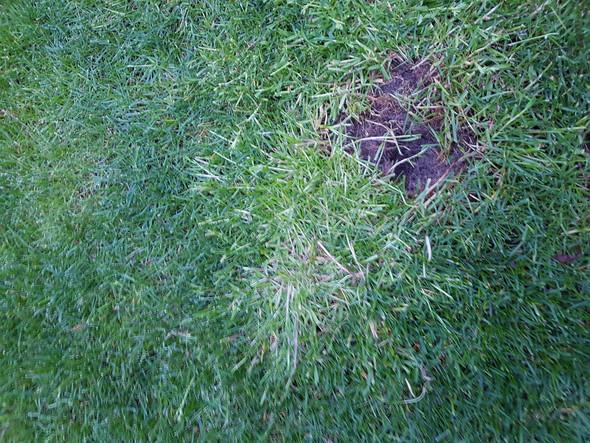 Was sind das für Pflanzen im Rasen?