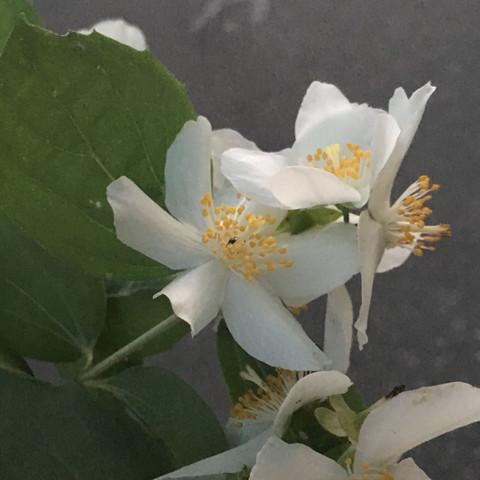 1 Pflanze  - (Biologie, Pflanzen, Botanik)