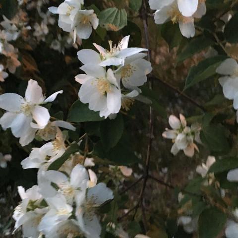 2Pflanze  - (Biologie, Pflanzen, Botanik)