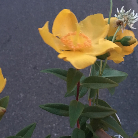 3Pflanze  - (Biologie, Pflanzen, Botanik)