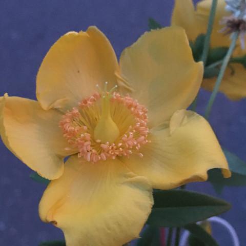 4Pflanze  - (Biologie, Pflanzen, Botanik)