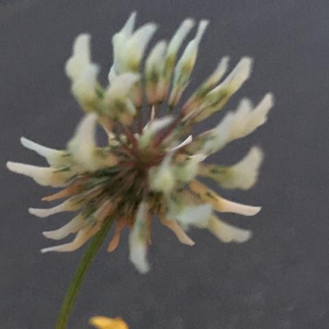 5Pflanze  - (Biologie, Pflanzen, Botanik)