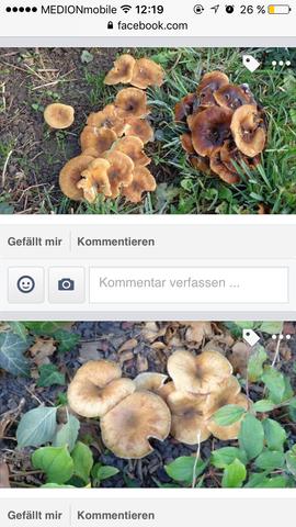 Was sind das für Pilze im garten ?