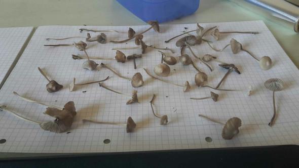 Pilz A - (Gesundheit und Medizin, Tiere, Pilze)
