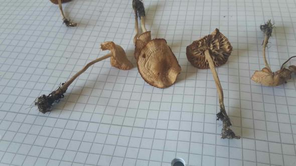 Pilz B - (Gesundheit und Medizin, Tiere, Pilze)