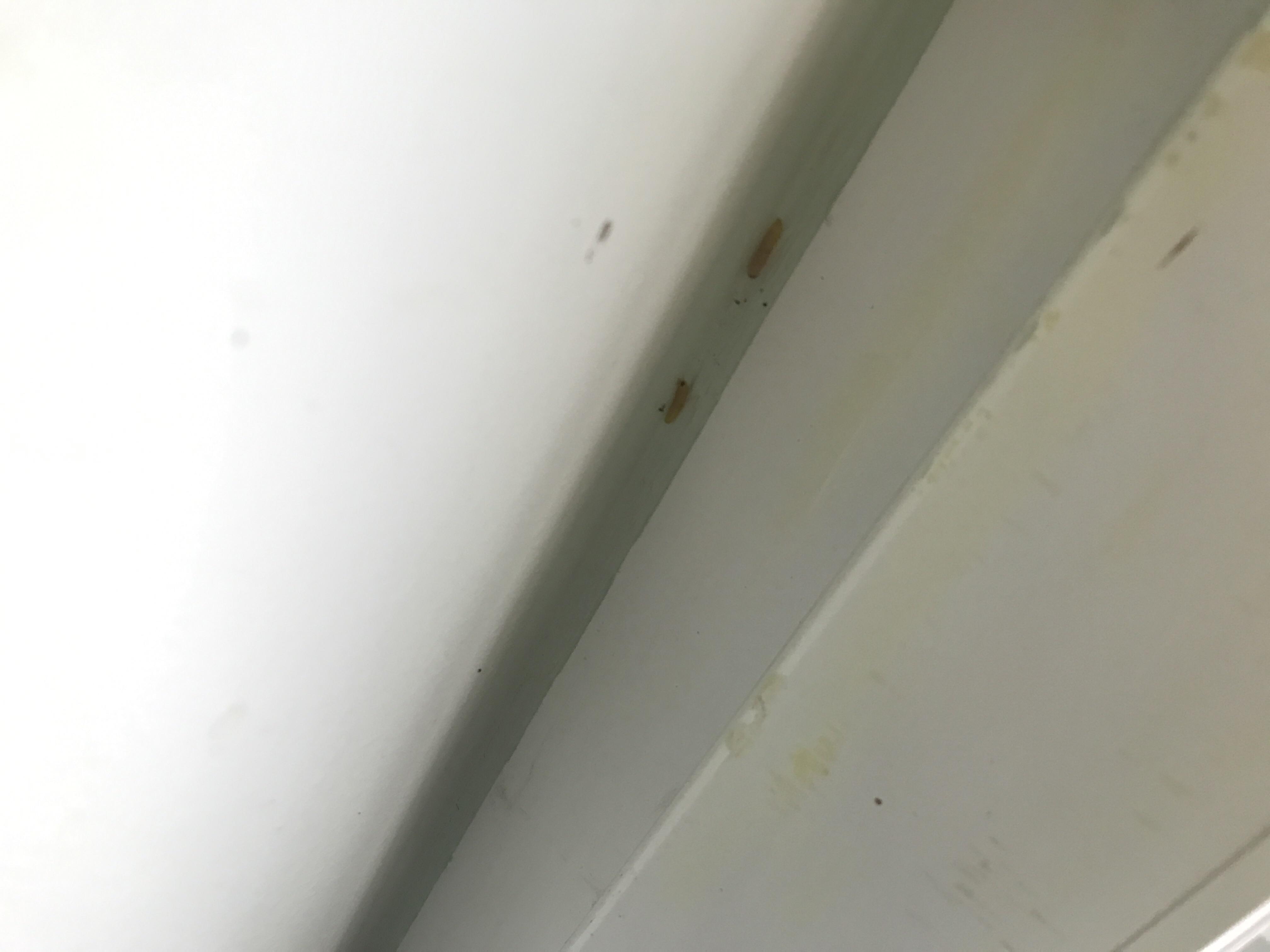 was sind das f r raupen und wo kommen sie her insekten ungeziefer sch dlinge. Black Bedroom Furniture Sets. Home Design Ideas